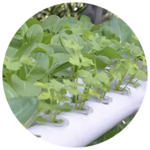 where to buy-home hydroponic kits online